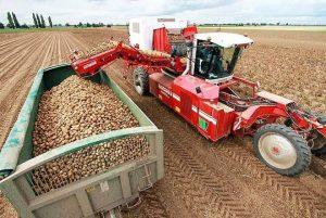 Картинка: Уборка картофеля