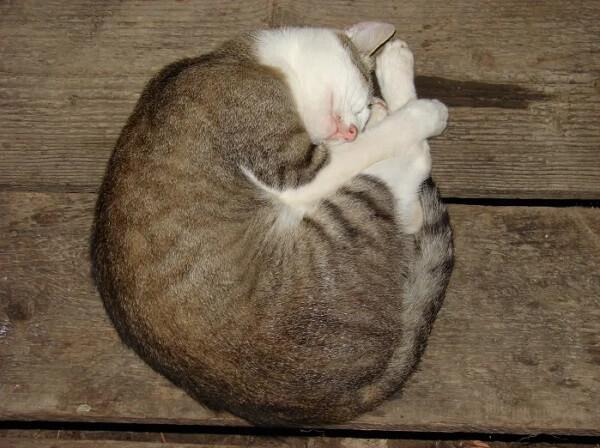 Pic.: Cat's Math