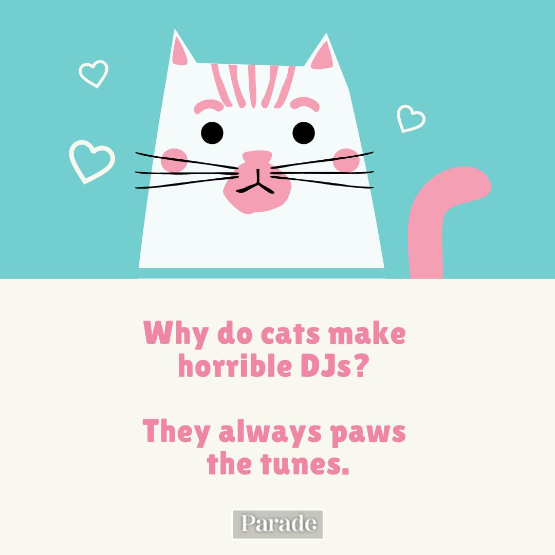 Pic.: © Cat Jokes. Feline Funny? Purrfect!
