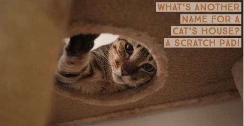 Pic.: Scratch Pad